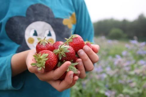 fraises oree bois